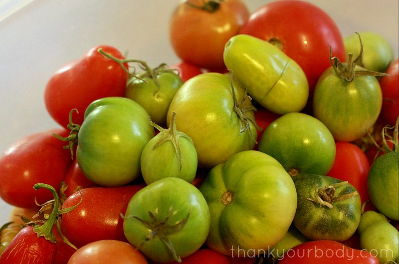 Try this savory lacto-fermented green tomato salsa!